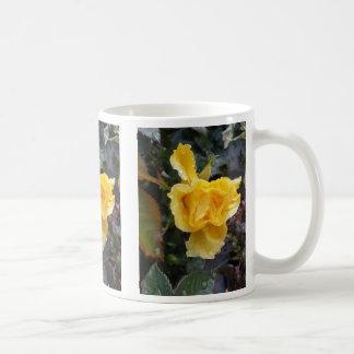 Gotas de agua en los rosas - rosa amarillo taza