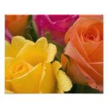 Gotas de agua en rosas amarillo-naranja y rosados impresión fotográfica