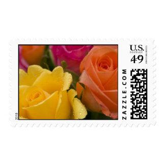 Gotas de agua en rosas amarillo-naranja y rosados