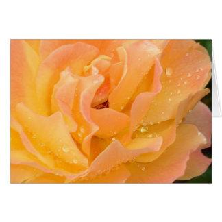 Gotas de agua en tarjeta en blanco de los rosas
