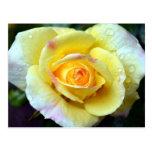 Gotas de agua en un rosa amarillo tarjeta postal