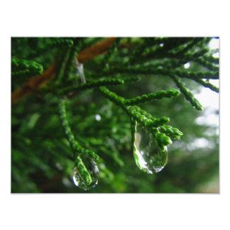 Gotas de agua en una rama de árbol cojinete