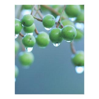 """Gotas de agua folleto 8.5"""" x 11"""""""