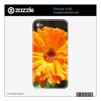 Gotas de agua soleadas del Calendula Skins Para eliPhone 4
