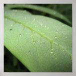 Gotas de lluvia en la hoja impresiones