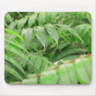 Gotas de lluvia en las hojas de Sumac Tapete De Raton