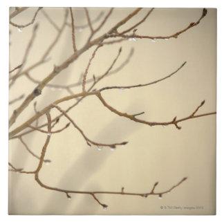 Gotas de lluvia en ramas de árbol azulejo cuadrado grande