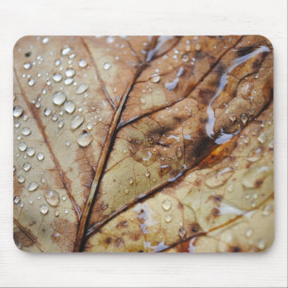 Gotas de lluvia en un cojín de ratón de la hoja tapete de raton