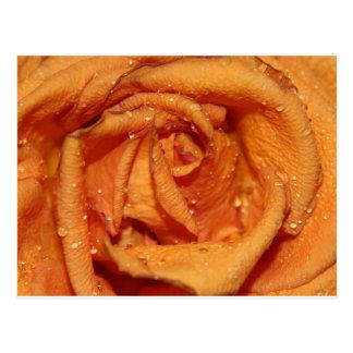 Gotas de rocío color de rosa anaranjadas postales