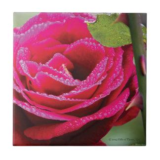 Gotas de rocío en color de rosa de color rosa teja