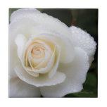 Gotas de rocío en el rosa blanco - baldosa azulejos cerámicos