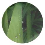 Gotas del agua en hierba platos de comidas