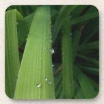 Gotas del agua en hierba posavaso