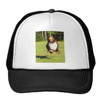 Gotcha!!! Mesh Hats