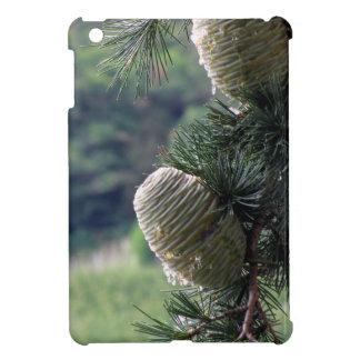 Goteo de la rama de árbol de pino con la resina