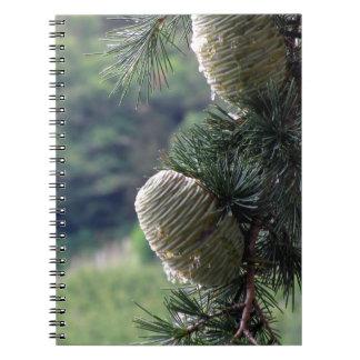 Goteo de la rama de árbol de pino con la resina cuadernos