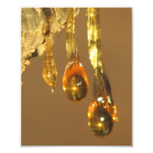 Goteos de la savia del árbol impresión fotográfica
