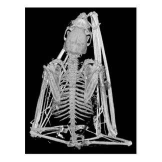 Gothic Bat Skeleton Postcard