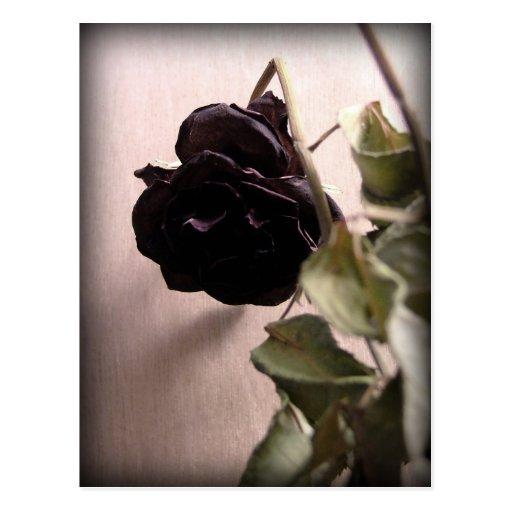 Gothic Dead Rose Postcard