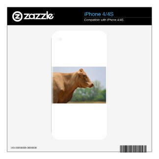 Gothic Posed Cow iPhone 4S Decals