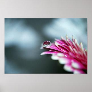 Gotita de agua en la flor rosada posters
