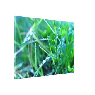 Gotitas de agua en hierba impresión en lona