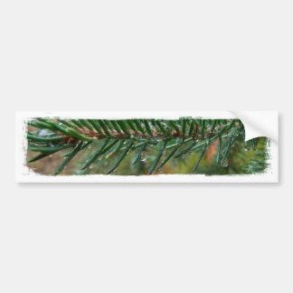 Gotitas de agua en rama Spruce Etiqueta De Parachoque