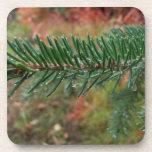 Gotitas de agua en rama Spruce; Felices Navidad Posavasos De Bebidas