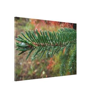 Gotitas de agua en rama Spruce Impresión En Lienzo Estirada