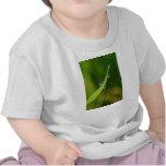 Gotitas de agua en una cuchilla de la hierba verde camiseta