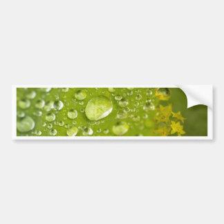 Gotitas de la lluvia en una hoja verde etiqueta de parachoque