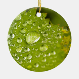 Gotitas de la lluvia en una hoja verde adorno redondo de cerámica