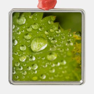 Gotitas de la lluvia en una hoja verde adorno cuadrado plateado