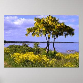Gotland Island Baltic Sea Sweden Seascape Poster