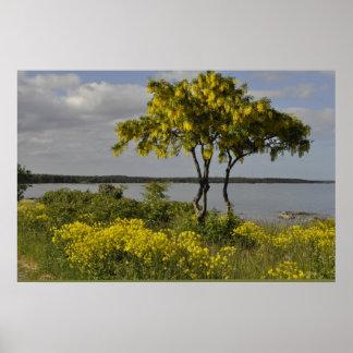 gotland island sweden yellow tree flower field sea poster
