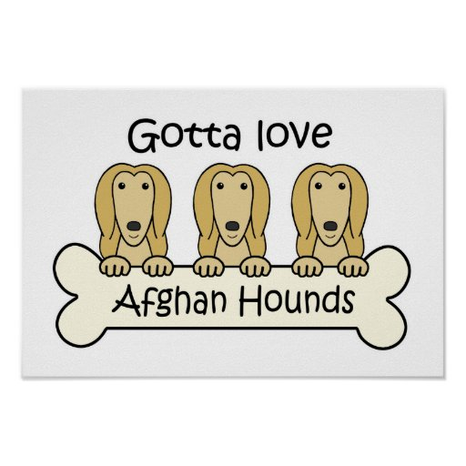 Gotta Love Afghan Hounds Poster