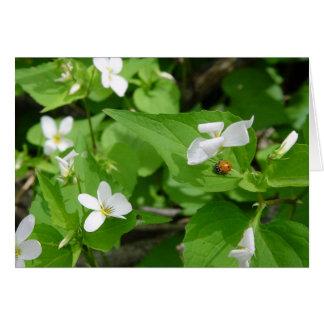 Gotta Love Ladybugs (3) Greeting Card