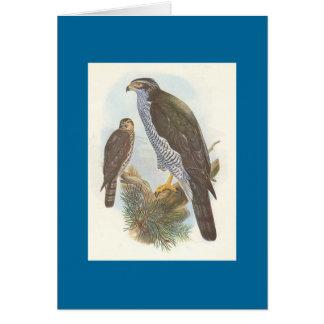 Gould - Accipiter gentilis Goshawk Card