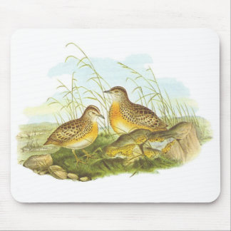 Gould - Andalusian Hemipode - Turnis sylvatica Mouse Pad