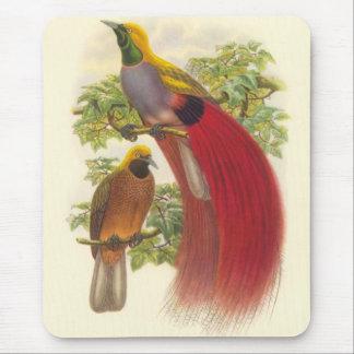 Gould - ave del paraíso Gris-De pecho Mouse Pads