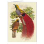 Gould - ave del paraíso Gris-De pecho Tarjeta De Felicitación