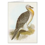 Gould - Bearded Vulture - Lammergeyer Greeting Cards