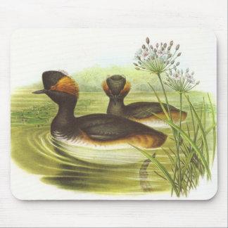 Gould - Black-Necked Grebe Podiceps nigricollis Mouse Pad
