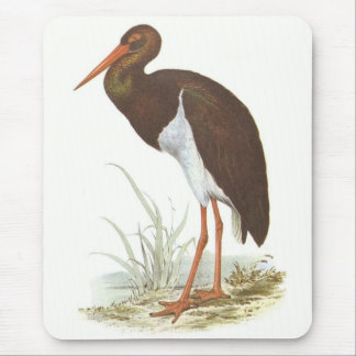 Gould - Black Stork - Cliconia nigra Mouse Pad