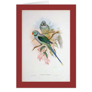 Gould - Blue-Winged Parakeet Card