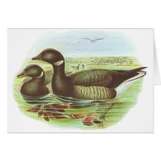 Gould - Brent Goose - Branta hernicla Greeting Cards