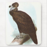 Gould - buitre negro - monachus del Aegypius Tapete De Ratones