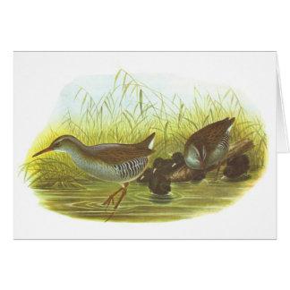 Gould - carril del agua - aquaticus de Rallus Tarjeta De Felicitación