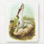 Gould - cigüeña blanca - ciconia del Ciconia Alfombrillas De Ratón