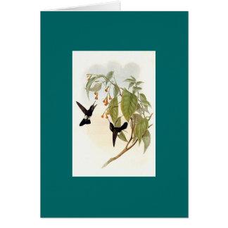 Gould - colibrí canoso de la Soplo-Pierna Tarjeta De Felicitación